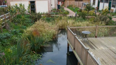 Natural pond surrounded by decking area with buildings in the background