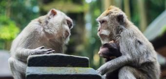 Two monkeys looking like they are having a conversation.
