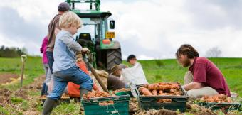 Child helping farm carrots with a tractor in the background.  Credit: Community Supported Agriculture (CSA) Network UK and Canalside Community Food