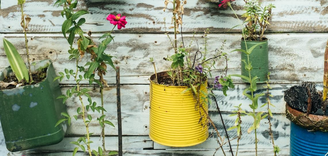 Selection of recycled coloured plant pots on a white wall. Photo: Bernard Hermant/Unsplash